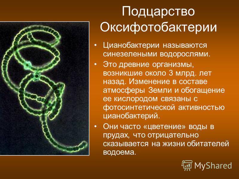 Подцарство Оксифотобактерии Цианобактерии называются сине-зелеными водорослями. Это древние организмы, возникшие около 3 млрд. лет назад. Изменение в составе атмосферы Земли и обогащение ее кислородом связаны с фотосинтетической активностью цианобакт