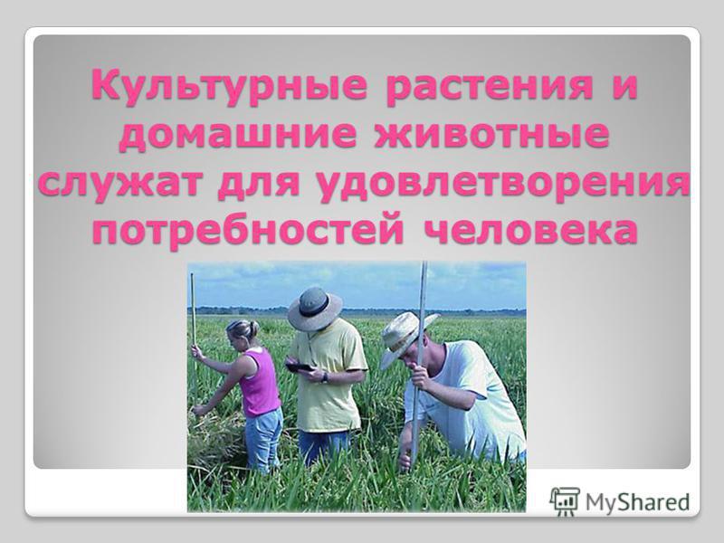 Культурные растения и домашние животные служат для удовлетворения потребностей человека