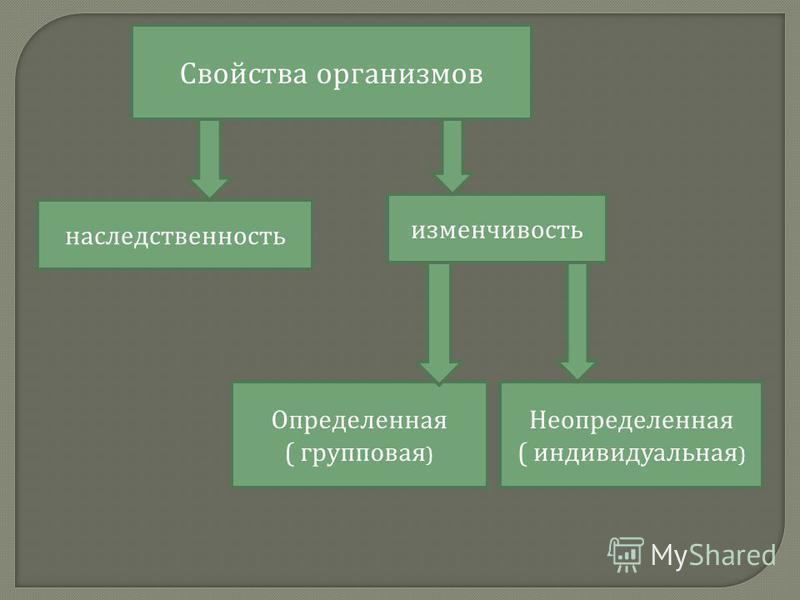 Свойства организмов наследственность изменчивость Определенная ( групповая ) Неопределенная ( индивидуальная )