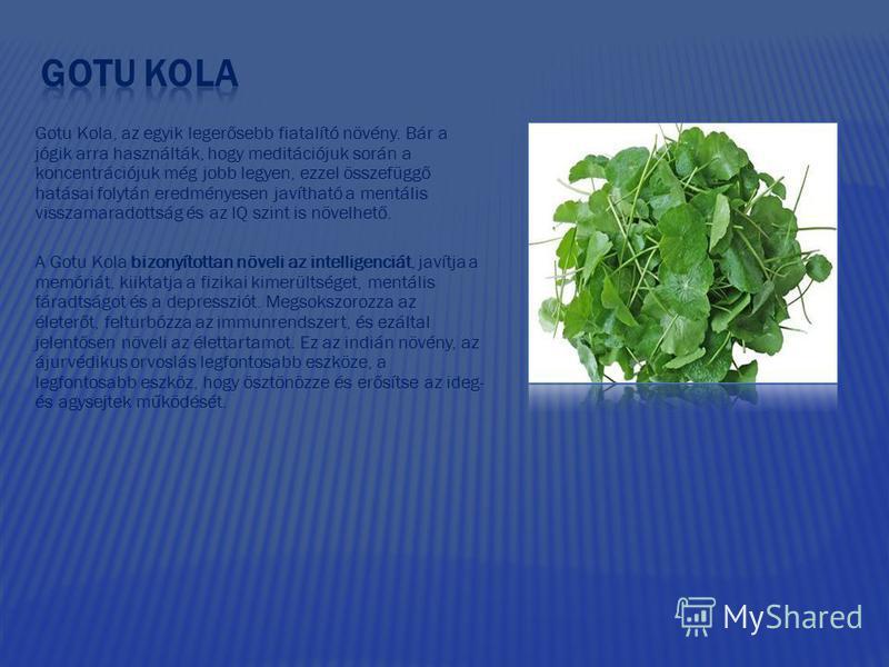 Gotu Kola, az egyik legerősebb fiatalító növény. Bár a jógik arra használták, hogy meditációjuk során a koncentrációjuk még jobb legyen, ezzel összefüggő hatásai folytán eredményesen javítható a mentális visszamaradottság és az IQ szint is növelhető.