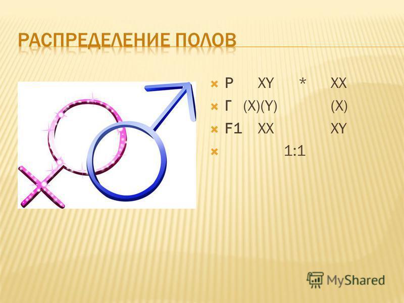 Р XY *XX Г (X)(Y)(X) F1 XXXY 1:1