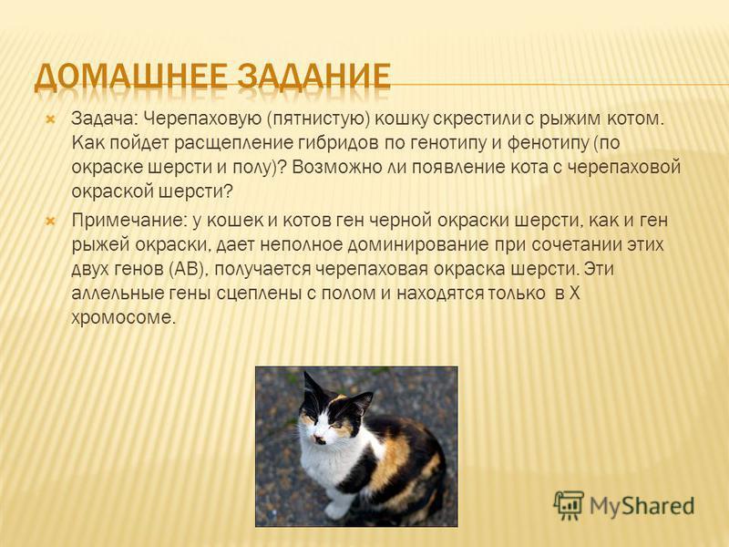 Задача: Черепаховую (пятнистую) кошку скрестили с рыжим котом. Как пойдет расщепление гибридов по генотипу и фенотипу (по окраске шерсти и полу)? Возможно ли появление кота с черепаховой окраской шерсти? Примечание: у кошек и котов ген черной окраски