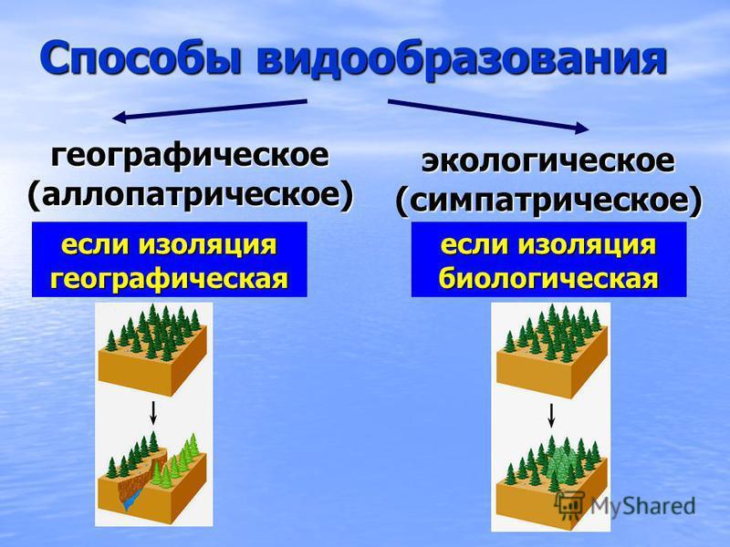Способы видообразования географическое(аллопатрическое) экологическое(симпатрическое) если изоляция географическая если изоляция биологическая