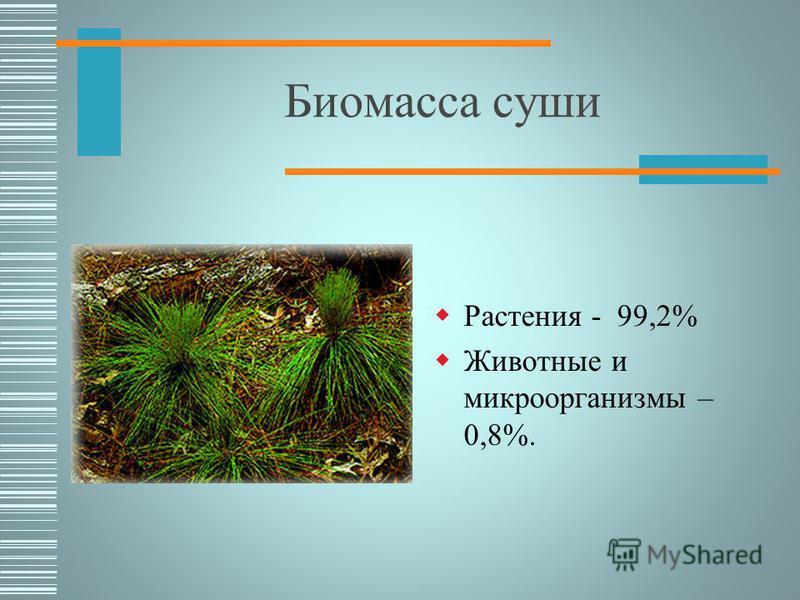 Биомасса Общая масса живых организмов 2,43*10 12 тонн