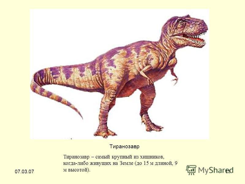 07.03.0711 Тиранозавр Тиранозавр – самый крупный из хищников, когда-либо живущих на Земле (до 15 м длиной, 9 м высотой).