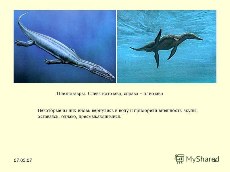 07.03.078 Плезиозавры. Слева нотозавр, справа – плиозавр Некоторые из них вновь вернулись в воду и приобрели внешность акулы, оставаясь, однако, пресмыкающимися.