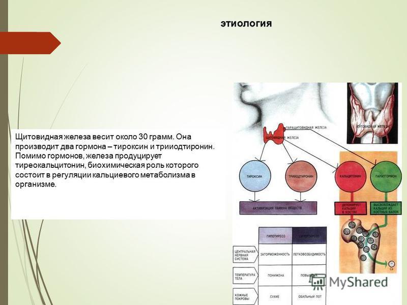 Щитовидная железа весит около 30 грамм. Она производит два гормона – тироксин и трийодтиронин. Помимо гормонов, железа продуцирует тиреокальцитонин, биохимическая роль которого состоит в регуляции кальциевого метаболизма в организме. этиология