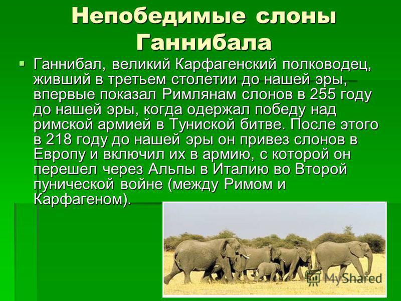 Непобедимые слоны Ганнибала Ганнибал, великий Карфагенский полководец, живший в третьем столетии до нашей эры, впервые показал Римлянам слонов в 255 году до нашей эры, когда одержал победу над римской армией в Туниской битве. После этого в 218 году д