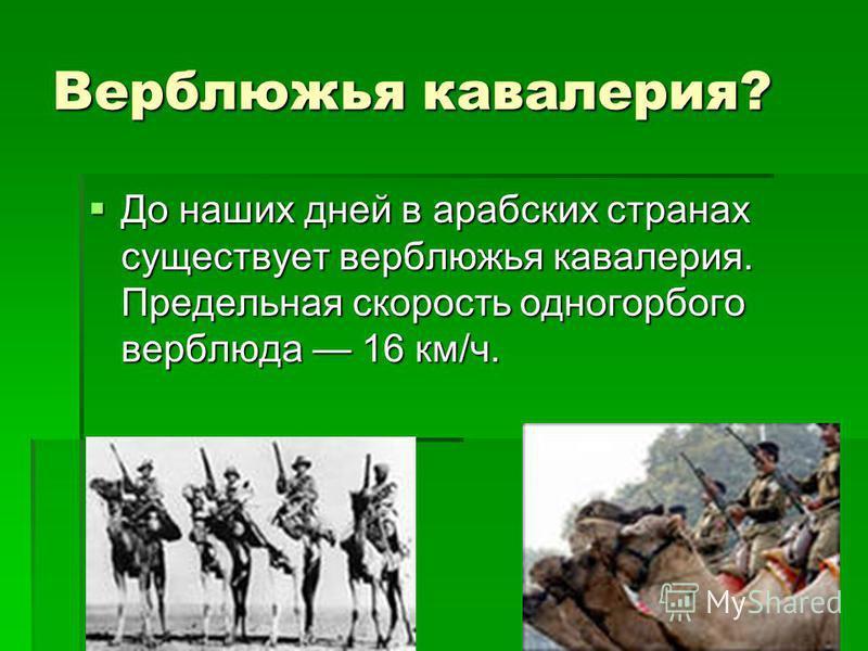 Верблюжья кавалерия? До наших дней в арабских странах существует верблюжья кавалерия. Предельная скорость одногорбого верблюда 16 км/ч. До наших дней в арабских странах существует верблюжья кавалерия. Предельная скорость одногорбого верблюда 16 км/ч.