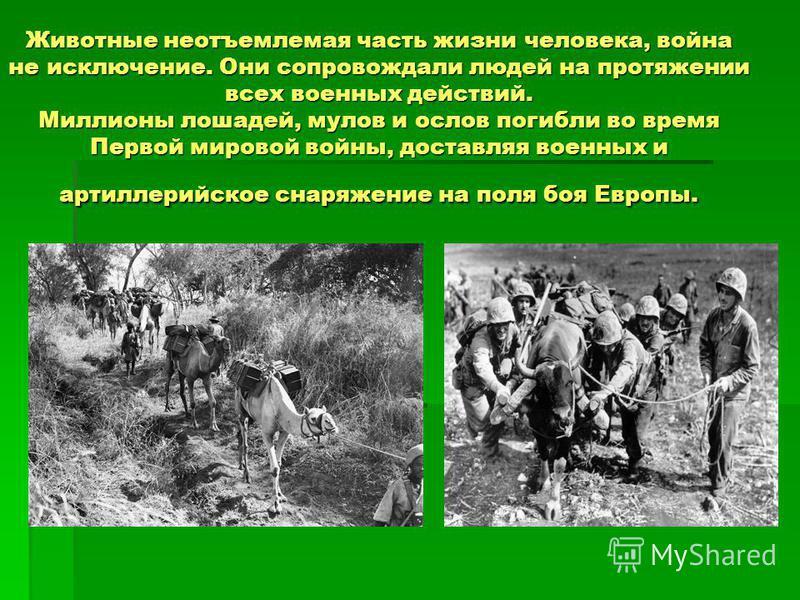Животные неотъемлемая часть жизни человека, война не исключение. Они сопровождали людей на протяжении всех военных действий. Миллионы лошадей, мулов и ослов погибли во время Первой мировой войны, доставляя военных и артиллерийское снаряжение на поля