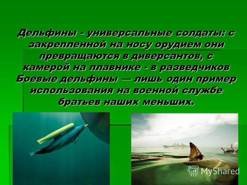 Дельфины - универсальные солдаты: с закрепленной на носу орудием они превращаются в диверсантов, с камерой на плавнике - в разведчиков Боевые дельфины лишь один пример использования на военной службе братьев наших меньших.