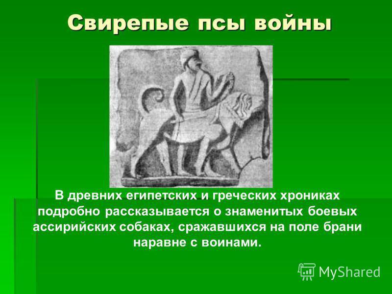 Свирепые псы войны В древних египетских и греческих хрониках подробно рассказывается о знаменитых боевых ассирийских собаках, сражавшихся на поле брани наравне с воинами.