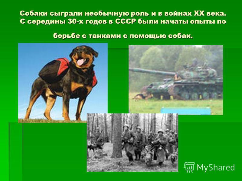 Собаки сыграли необычную роль и в войнах XX века. С середины 30-х годов в СССР были начаты опыты по борьбе с танками с помощью собак.