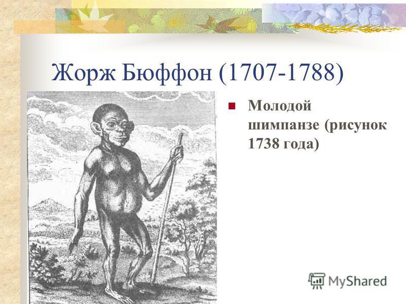 Жорж Бюффон (1707-1788) Молодой шимпанзе (рисунок 1738 года)