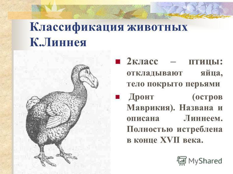 Классификация животных К.Линнея 2 класс – птицы: откладывают яйца, тело покрыто перьями Дронт (остров Маврикия). Названа и описана Линнеем. Полностью истреблена в конце XVII века.