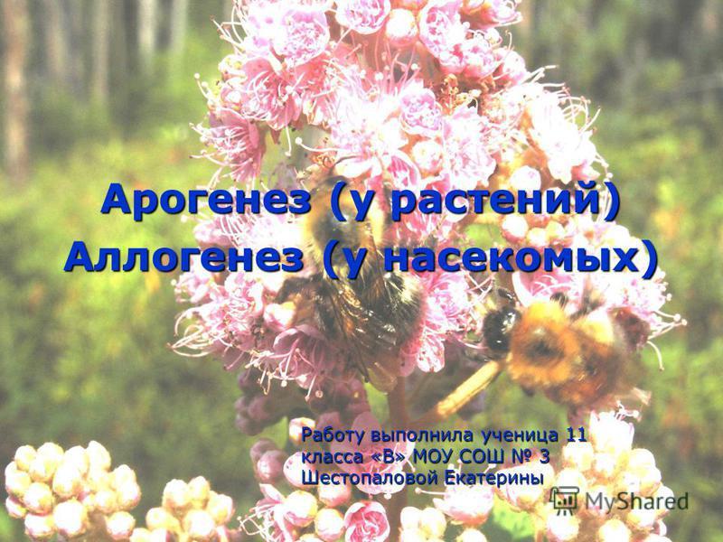 Арогенез (у растений) Аллогенез (у насекомых) Работу выполнила ученица 11 класса «В» МОУ СОШ 3 Шестопаловой Екатерины