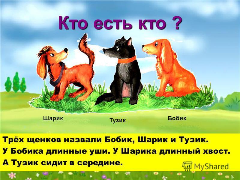 Трёх щенков назвали Бобик, Шарик и Тузик. У Бобика длинные уши. У Шарика длинный хвост. А Тузик сидит в середине. Кто есть кто ? Шарик Тузик Бобик