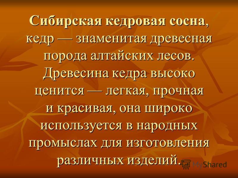 Сибирская кедровая сосна, кедр знаменитая древесная порода алтайских лесов. Древесина кедра высоко ценится легкая, прочная и красивая, она широко используется в народных промыслах для изготовления различных изделий.