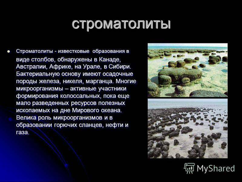 строматолиты Строматолиты - известковые образования в виде столбов, обнаружены в Канаде, Австралии, Африке, на Урале, в Сибири. Бактериальную основу имеют осадочные породы железа, никеля, марганца. Многие микроорганизмы – активные участники формирова