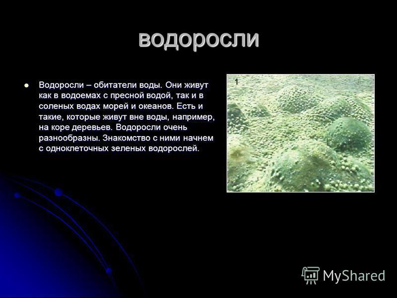 водоросли Водоросли – обитатели воды. Они живут как в водоемах с пресной водой, так и в соленых водах морей и океанов. Есть и такие, которые живут вне воды, например, на коре деревьев. Водоросли очень разнообразны. Знакомство с ними начнем с одноклет