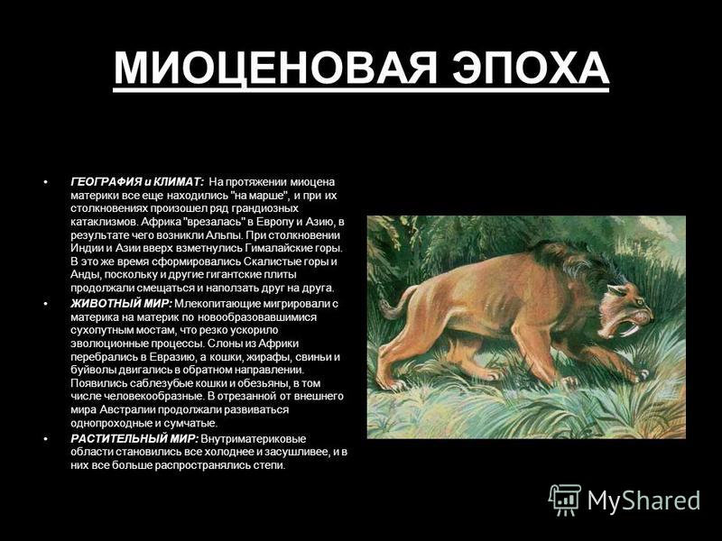 МИОЦЕНОВАЯ ЭПОХА ГЕОГРАФИЯ и КЛИМАТ: На протяжении миоцена материки все еще находились
