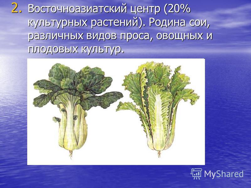 2. Восточноазиатский центр (20% культурных растений). Родина сои, различных видов проса, овощных и плодовых культур.