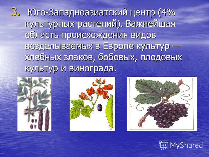 3. Юго-Западноазиатский центр (4% культурных растений). Важнейшая область происхождения видов возделываемых в Европе культур хлебных злаков, бобовых, плодовых культур и винограда.