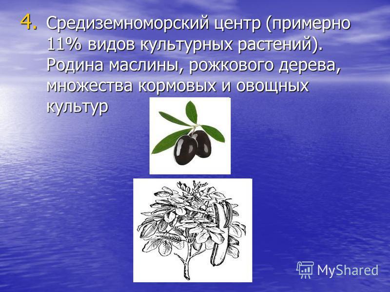 4. Средиземноморский центр (примерно 11% видов культурных растений). Родина маслины, рожкового дерева, множества кормовых и овощных культур