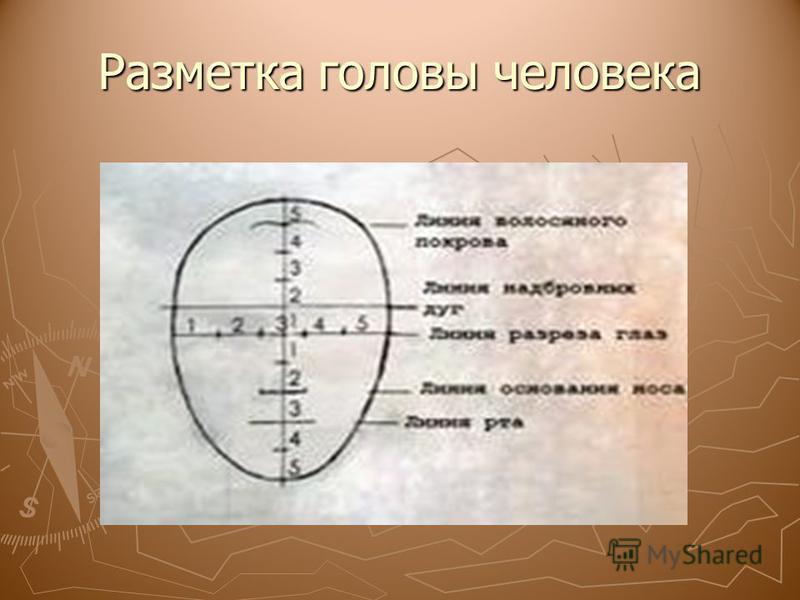 Разметка головы человека
