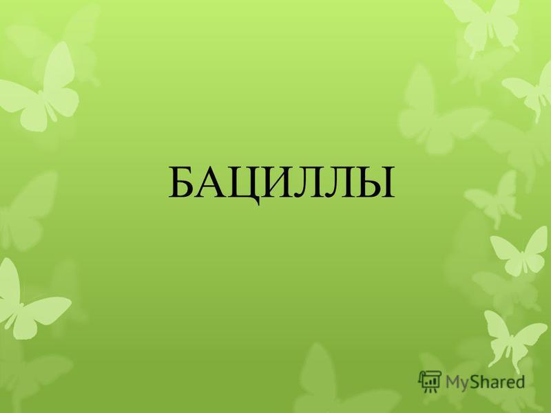 БАЦИЛЛЫ