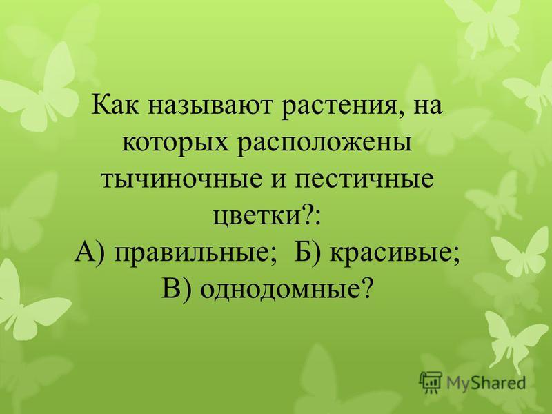 Как называют растения, на которых расположены тычиночные и пестичные цветки?: А) правильные; Б) красивые; В) однодомные?