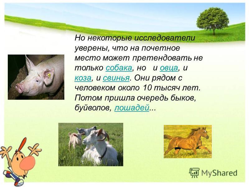 Но некоторые исследователи уверены, что на почетное место может претендовать не только собака, но и овца, и коза, и свинья. Они рядом с человеком около 10 тысяч лет. Потом пришла очередь быков, буйволов, лошадей...собака овца коза свинья лошадей