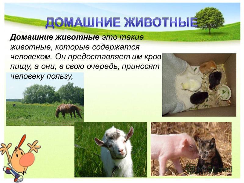 Домашние животные это такие животные, которые содержатся человеком. Он предоставляет им кров и пищу, а они, в свою очередь, приносят человеку пользу,
