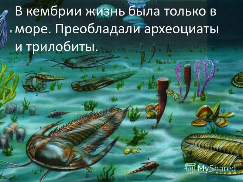 В кембрии жизнь была только в море. Преобладали археоциаты и трилобиты.