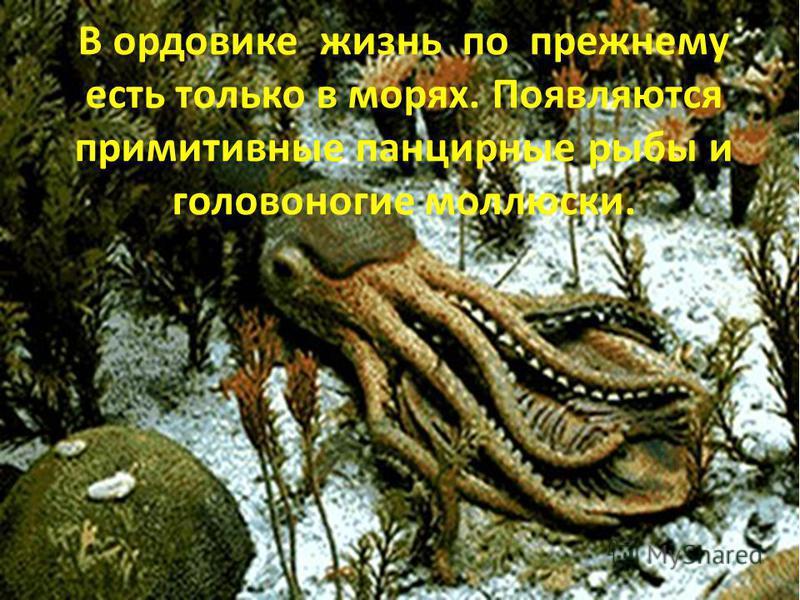 В ордовике жизнь по прежнему есть только в морях. Появляются примитивные панцирные рыбы и головоногие моллюски.