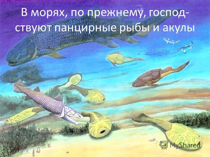 В морях, по прежнему, господствуют панцирные рыбы и акулы