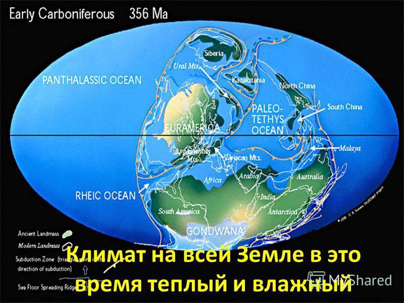 Климат на всей Земле в это время теплый и влажный
