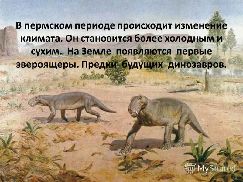 В пермском периоде происходит изменение климата. Он становится более холодным и сухим. На Земле появляются первые звероящеры. Предки будущих динозавров.