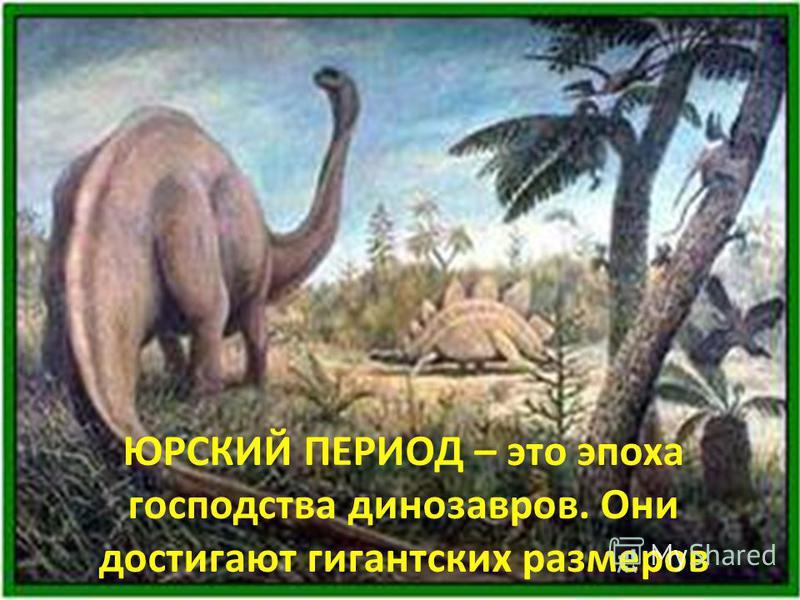ЮРСКИЙ ПЕРИОД – это эпоха господства динозавров. Они достигают гигантских размеров