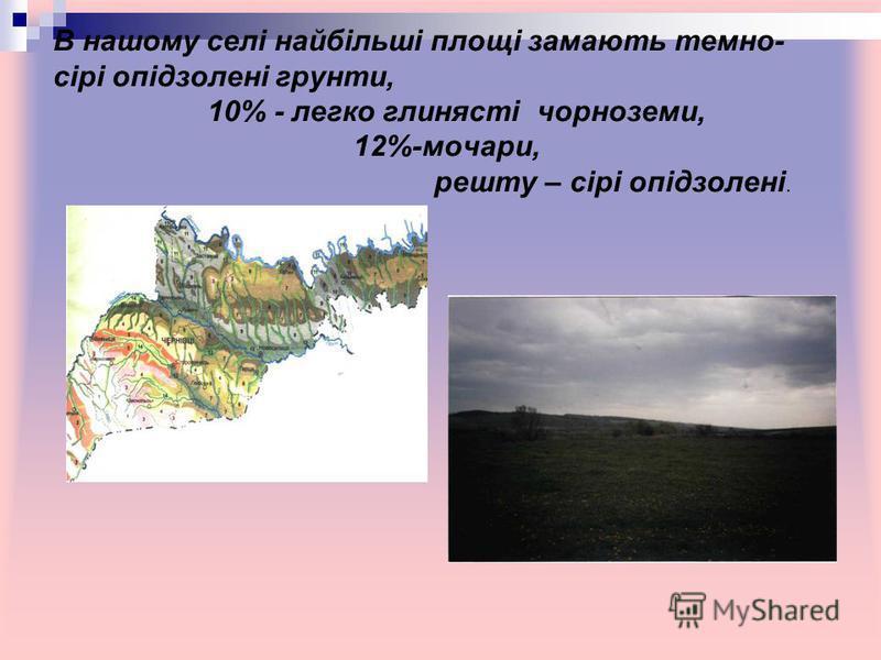 В нашому селі найбільші площі замають темно- сірі опідзолені грунти, 10% - легко глинясті чорноземи, 12%-мочари, решту – сірі опідзолені.