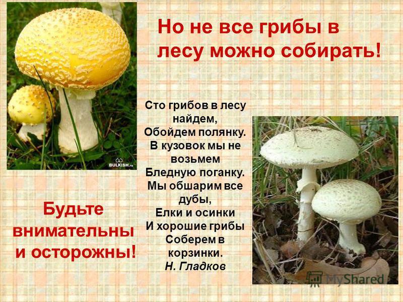 Но не все грибы в лесу можно собирать! Сто грибов в лесу найдем, Обойдем полянку. В кузовок мы не возьмем Бледную поганку. Мы обшарим все дубы, Елки и осинки И хорошие грибы Соберем в корзинки. Н. Гладков Будьте внимательны и осторожны!