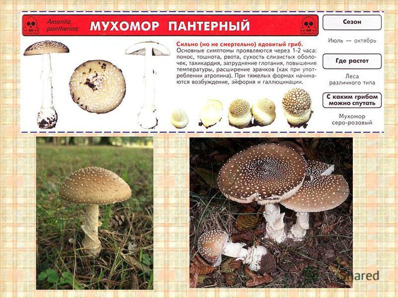 Как связаны между собой грибы