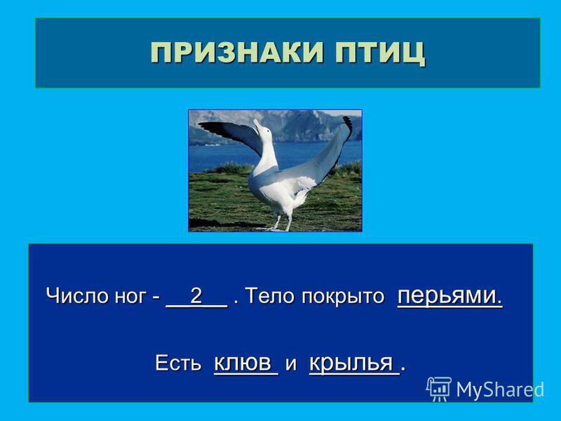 ПРИЗНАКИ ПТИЦ Число ног - __2__. Тело покрыто перьями. Число ног - __2__. Тело покрыто перьями. Есть клюв и крылья.