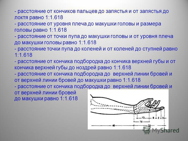 - расстояние от кончиков пальцев до запястья и от запястья до локтя равно 1:1.618 - расстояние от уровня плеча до макушки головы и размера головы равно 1:1.618 - расстояние от точки пупа до макушки головы и от уровня плеча до макушки головы равно 1:1