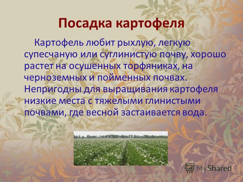 Посадка картофеля Картофель любит рыхлую, легкую супесчаную или суглинистую почву, хорошо растет на осушенных торфяниках, на черноземных и пойменных почвах. Непригодны для выращивания картофеля низкие места с тяжелыми глинистыми почвами, где весной з