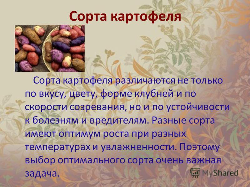 Сорта картофеля Сорта картофеля различаются не только по вкусу, цвету, форме клубней и по скорости созревания, но и по устойчивости к болезням и вредителям. Разные сорта имеют оптимум роста при разных температурах и увлажненности. Поэтому выбор оптим