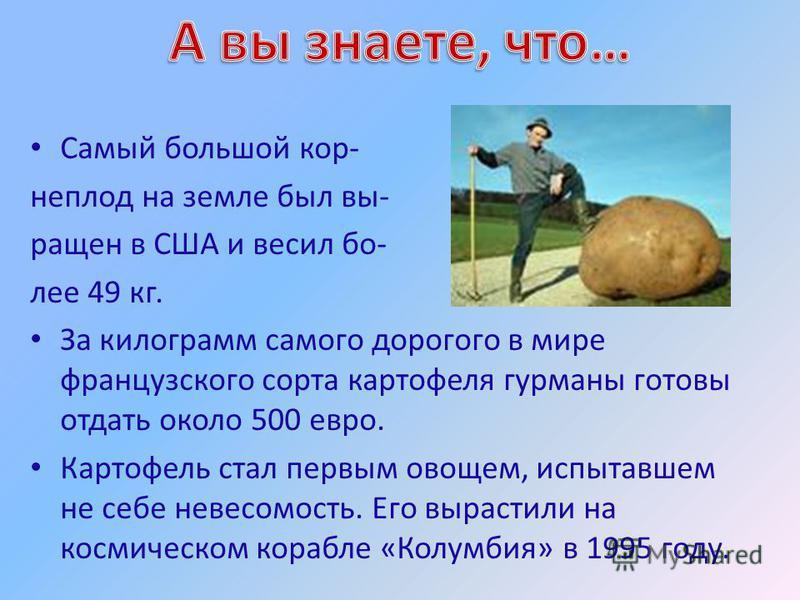 Самый большой корнеплод на земле был вы- ращен в США и весил более 49 кг. За килограмм самого дорогого в мире французского сорта картофеля гурманы готовы отдать около 500 евро. Картофель стал первым овощем, испытавшем не себе невесомость. Его вырасти