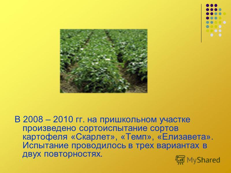 В 2008 – 2010 гг. на пришкольном участке произведено сортоиспытание сортов картофеля «Скарлет», «Темп», «Елизавета». Испытание проводилось в трех вариантах в двух повторностях.