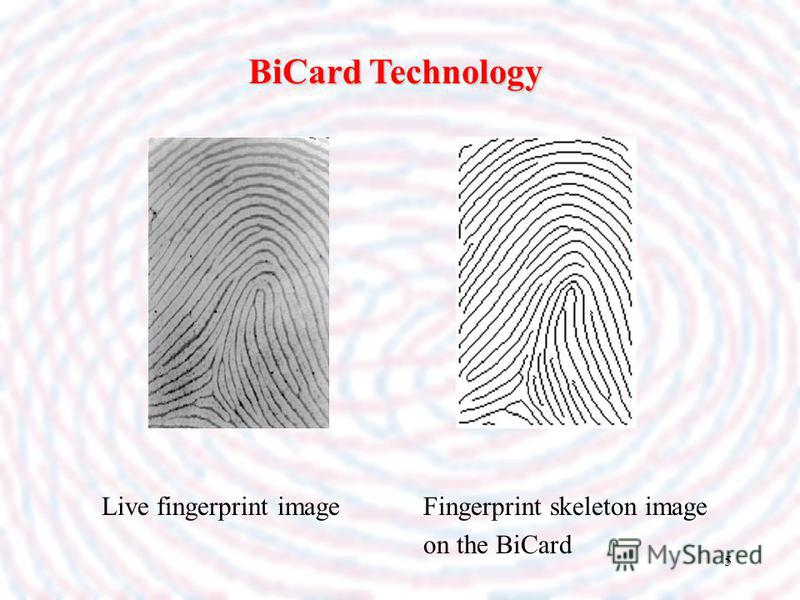 5 Live fingerprint image BiCard Technology Fingerprint skeleton image on the BiCard
