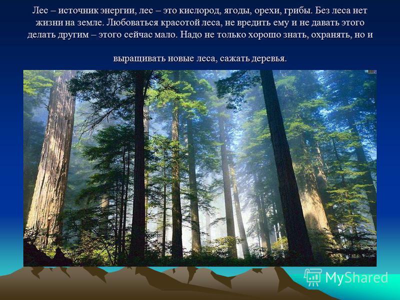 Лес – источник энергии, лес – это кислород, ягоды, орехи, грибы. Без леса нет жизни на земле. Любоваться красотой леса, не вредить ему и не давать этого делать другим – этого сейчас мало. Надо не только хорошо знать, охранять, но и выращивать новые л